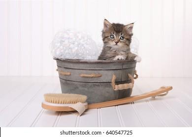 Kitten in Washtub Getting Groomed By Bubble Bath