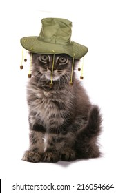 Kitten wearing Australian cork hat studio cutout