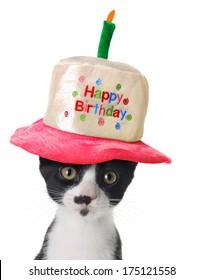 Kitten wearing a Happy Birthday hat.