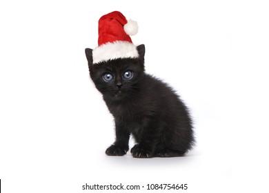 Kitten Wearing a Santa Hat on White