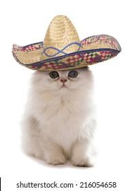 Kitten wearing a sombrero studio cutout