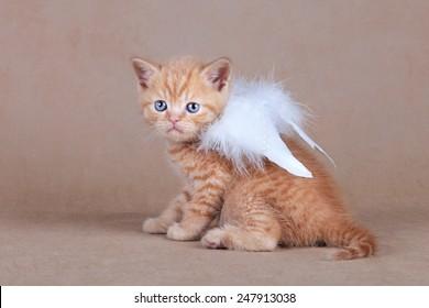 Kitten with wings