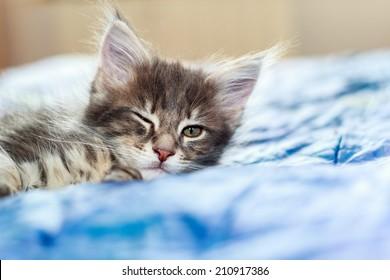 A kitten winking
