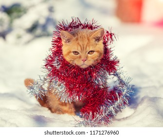 Kitten wrapped in christmas tinsel, sitting outdoors on the snow in winter.