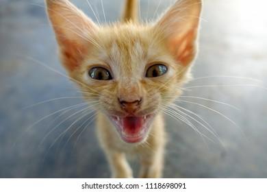 kitten young cat