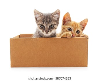 Kittens in the box isolated on a white background.