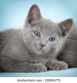 "Kittens (breed ""Russian Blue"") on the blue background"