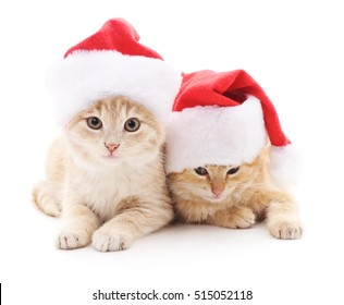 Kittens in Christmas hats isolated on a white background.