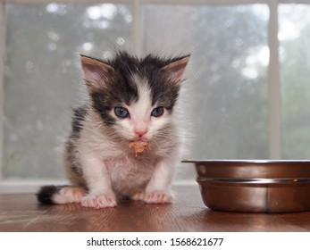 Kitten's eating wet food, chin covered in food