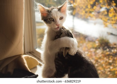 Kittens hugging each other