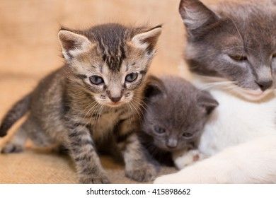 Kittens with mom cat