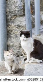 Kittens in a mountain barn