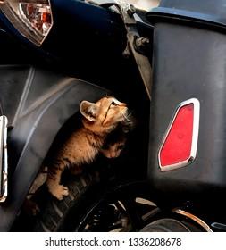 Kittens nestled on my bike tyres