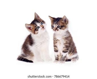 kittens on white background