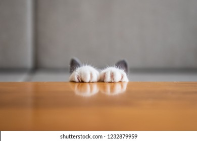 The kitten's paws are on the table.