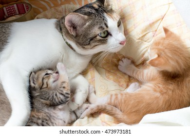 Kittens playing with hug of mother