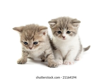 The kittens plays on a white background