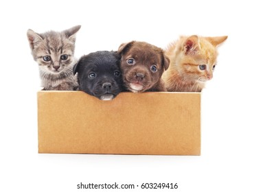Kittens and a puppies in a box on a white background.