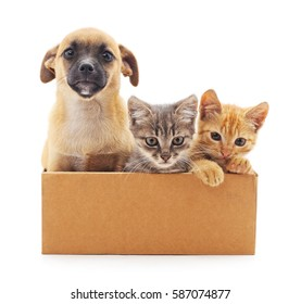 Kittens and a puppy in a box on a white background.