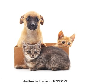 Kittens and puppy isolated on a white background.