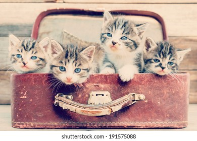 Kittens are sitting in vintage suitcase on a wooden background
