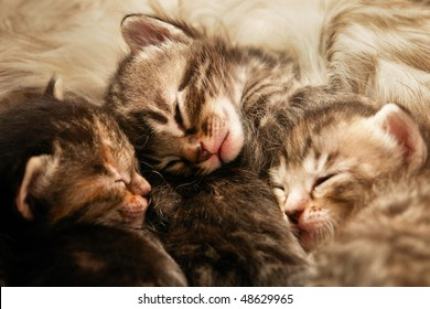 Kittens sleep