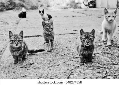 herding cats images stock photos vectors shutterstock