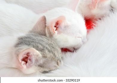 kittens sucking