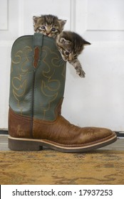 Kitties in a cowboy Boot