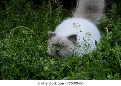 Kitties love to bask in the sun, chase butterflies and birds and sample sweet grass