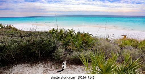 kitty cat on the beach by ocean