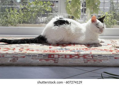 Kitty Cat Relaxing in a Sunny Window