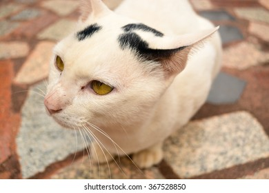 kitty on the bricks floor background