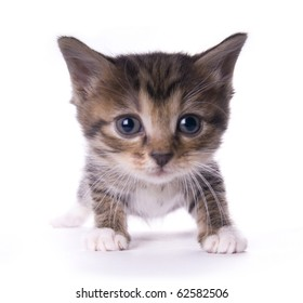 Kitty on the white isolated background