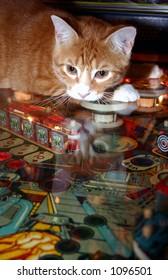 kitty pinball