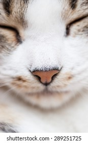 Kitty pink nose closeup showing whiskers chin and closed eyes