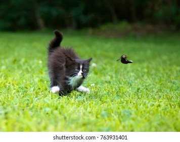 A kitty is running on the grass.