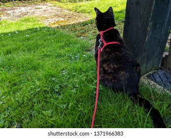 Kitty walk on a lead on the countryside