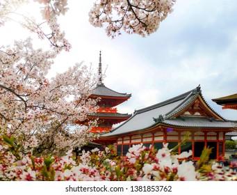 Kiyomizu dera temple with Sakura in spring.