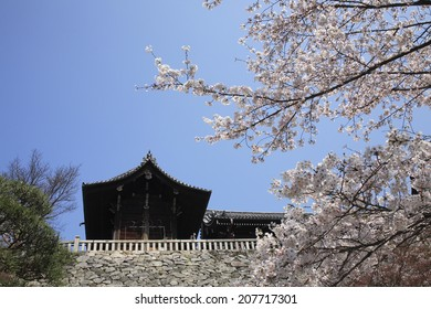 Kiyomizu Temple Blooming Cherry Blossoms