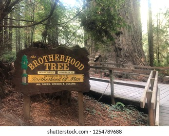 Klamath, CA - November 20, 2018: Brotherhood Tree is dedicated to the brotherhood of man in all races, creeds and colors at the Trees of Mystery park in the California Redwoods.