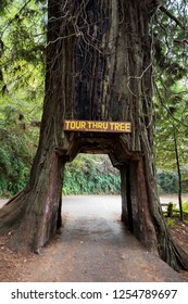 Klamath, CA - November 20, 2018: Tour Thru Tree in the small town of Klamath is an icon of the California Redwoods National Park. Vehicle owners can pay to drive their automobile through the tree.