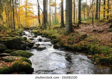 Kleine Ohe in national park bavarian forest.