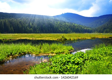 Kleiner Arbersee lake in the National park Bavarian forest,Germany. Beautiful spring landscape.