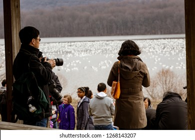 Kleinfeltersville, PA, USA - March 6, 2016:  Birdwatchers photograph the migrating snow geese at Middle Creek Wildlife Management Area near the Lancaster-Lebanon county line in Pennsylvania.