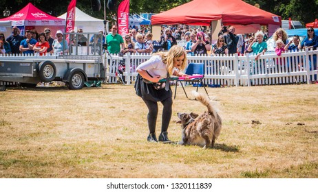 Knebworth / UK - 06 24 2017: Dancing with dogs performance during the Dogfest north at Knebworth House near London, UK. Summer British festival for dogs and their owners.