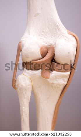 Knee Meniscus Medical Study Student Anatomy Stock Photo Edit Now