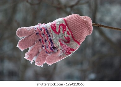 knitted mitten on a thin tree branch