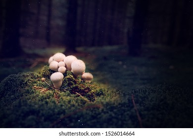 Knoll mushroom growing on the moss in the dark forest