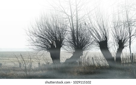 knotted willows in the morning mist at a field, rural landscape in mystic mood, copy space
